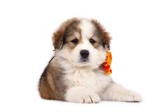 Furry dog Royalty Free Stock Image