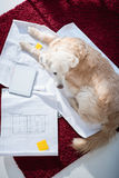 Furry dog lying on blueprints near digital tablet with blank screen royalty free stock photography