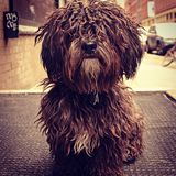 Furry Dog in New York City. Instagram filtered style image of a cute dog in New York City Stock Photo
