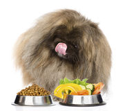Furry dog sitting with a bowls of dry cat food and vegetables. isolated Royalty Free Stock Photography