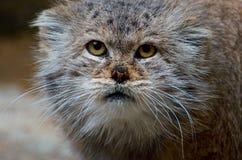 Furry face Royalty Free Stock Photos
