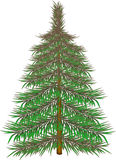 Furry fir-tree. Furry  large fir-tree on the white background Stock Images