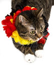 Furry german soccer fan. A cat with german national colors on a white background Stock Photo