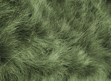 furry gräs Royaltyfri Bild