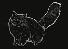 Furry gray cat. Big gray cat on a black background stock illustration