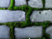 Furry green moss grew around the bricks. Royalty Free Stock Photos