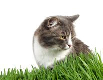 Furry grey cat in the grass Stock Photo