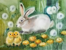 Furry hare with two Chicks. Ncute fluffy hare sitting in the grass, in front of him two yellow chicken stand next, around them white and yellow dandelions Stock Image