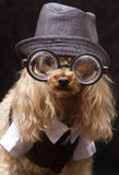 Furry Hipster Royalty Free Stock Image