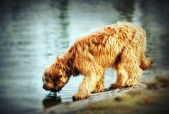 Furry hund royaltyfri bild