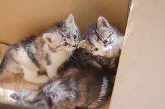 Furry kitten in cardboard box Royalty Free Stock Photography