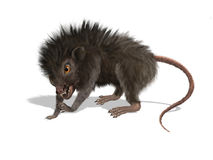 Furry Mutant Rat Royalty Free Stock Images