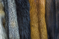 Furry Pelts Hung for Display royalty free stock image