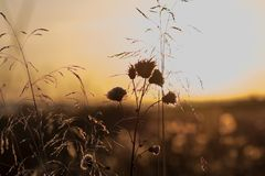 Furry prickle nature autumn red-ellow sunset Royalty Free Stock Images