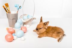 Furry rabbit and painted easter eggs on white. Adorable furry rabbit and painted easter eggs on white Stock Photography
