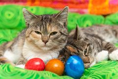 Cats with colorful easter eggs stock images