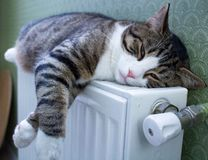 Furry striped pet cat lies on warm radiator resting, relaxing. Furry striped pet cat lying on warm radiator rests and relaxes stock image