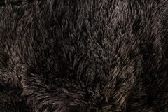 Furry texture Stock Photography