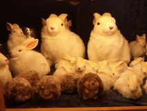 Furry toy of rabbits and hedgehogs. Toy of  rabbits and hedgehogs made of wool were selling in the shop of Berlin, Germany Royalty Free Stock Photography