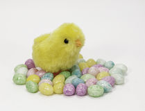Furry Yellow Chick and Candy Eggs Royalty Free Stock Image