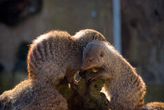 Furry young animals hugging. Closeup of furry young animals cuddled together Stock Photo