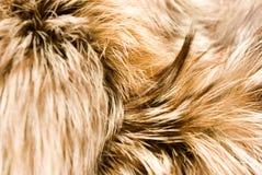Furs background Stock Photo