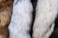 Furs on display for sale Stock Photography