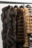 Furs Stock Image