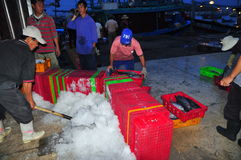 Furtiany przy Hon Ro portem morskim są ładowniczymi koszami ryba na ciężarówce lokalny zakład przetwórczy w Nha Trang mieście Obraz Royalty Free