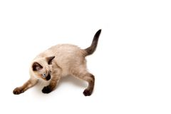 Furtive Kitten Royalty Free Stock Image