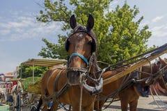 fury konia ilustracyjny raster wektor Zdjęcie Royalty Free