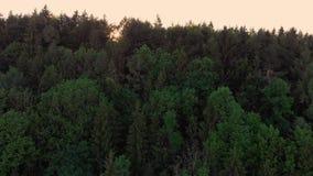 Fusée de lentille avec le vol au-dessus d'une forêt en Bavière, Allemagne banque de vidéos