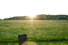 Fusée de lentille de coucher du soleil au-dessus d'un pré images stock