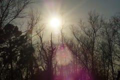 Fusée de lumière du soleil Photos libres de droits