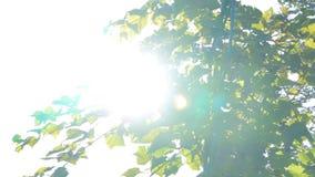 Fusée de lumière du soleil et de lentille, feuilles d'arbre banque de vidéos