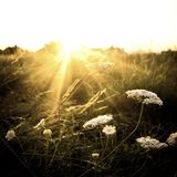 Fusée du soleil d'hiver Images stock