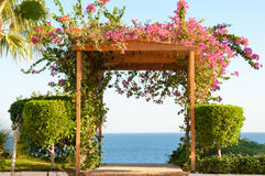 Fuschia Flowers Climbing a Wooden Trellis Archway Facing the Oce Royalty Free Stock Photo