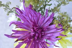 Fuscia colored aster in bouquet Royalty Free Stock Photography