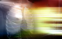 Fuselage humain et poumons Image stock