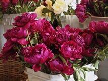 Fushia Blumen Lizenzfreie Stockfotos