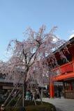 Fushimi Inari-taisha京都日本 库存照片