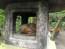 Fushimi-Inari Taisha, Kotyo, Япония Стоковое Изображение RF