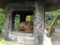 Fushimi-Inari Taisha, Kotyo, Giappone Immagine Stock Libera da Diritti