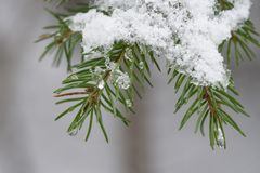 Fusión de la nieve en bosque fotos de archivo libres de regalías