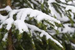 Fusión de la nieve en bosque imagenes de archivo