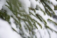 Fusión de la nieve en bosque imagen de archivo libre de regalías