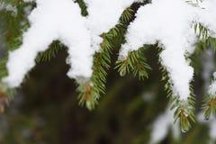 Fusión de la nieve en bosque foto de archivo