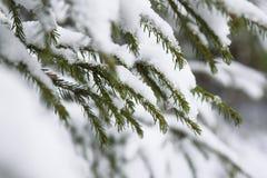 Fusión de la nieve en bosque fotografía de archivo libre de regalías