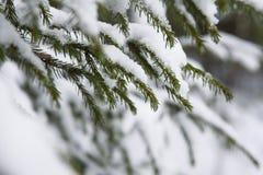 Fusión de la nieve en bosque imágenes de archivo libres de regalías