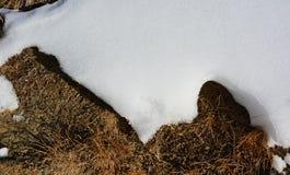 Fusión de la nieve en hierba seca Imagen de archivo
